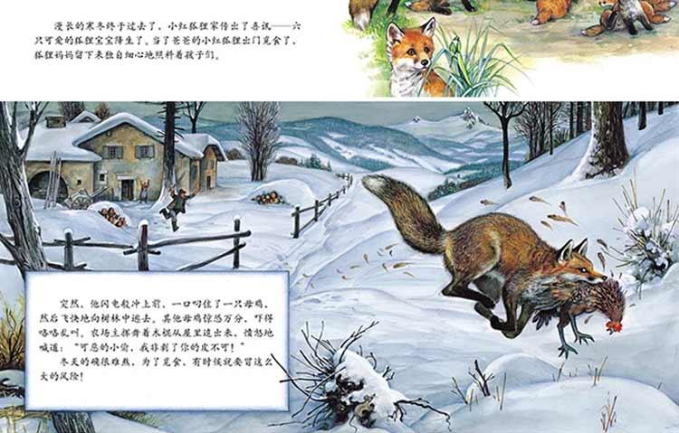 跟随小动物的足迹3-6岁全12册